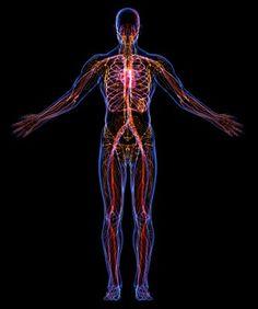 "Nutrients That Remove Blood Toxins. OPC 3 combats free radicals, "" the power of pycnogenol"" www.jodeedohs.com"