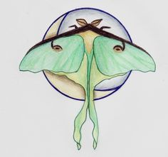LOVE.  luna moth tattoo sketch by ~callmefriday on deviantart