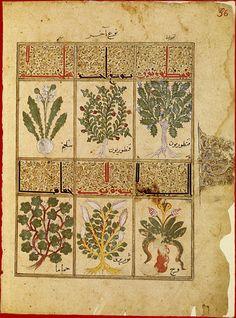 Dal  Kitab al-Diryâq, uno dei più antichi manoscritti arabi illustrati (XII sec.) sulla preparazione e l'uso della teriaca farmaceutica. Contiene una lunga presentazione delle categorie dei serpenti velenosi cui seguono le pagine illustrate con le piante utilizzate nella preparazione della teriaca per curare i morsi di serpente, quali la rucola, la liquirizia, il cardamomo, l'oppio, il pepe bianco e nero, l'incenso, il cappero, l'acacia, la valeriana, l'aglio, il porro.