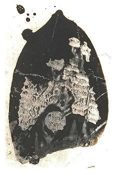 This was the footprint found at the Clutter's house after the crime: a bloodied footprint. Later found out to be Perry Smith's. Smith's footprint here ended up being key evidence in convicting Perry and Dick of the murder. Non Fiction Novels, Edward Smith, Atticus Finch, In Cold Blood, To Kill A Mockingbird, Serial Killers, True Crime, Will Smith, Mobsters