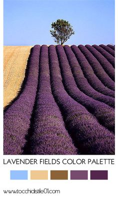 Lavender Fields Color Palette via tocchidistile01.com
