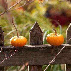 pumpkins on fence <3