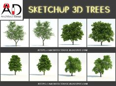 SKETCHUP 3D TREES SKETCHUP  3D TREES .  With This SKETCHUP 3D TREES u will be Able to Make a realistic Render ,  Click On the Download word To Get This Great 3D TREES , Enjoy !