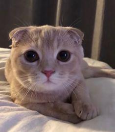 ▀▄▀▄▀▄ ʜʏɢᴡᴀᴛ ▄▀▄▀▄▀ I Love Cats, Crazy Cats, Cute Cats, Funny Cats, Animals And Pets, Baby Animals, Cute Animals, Kittens And Puppies, Cats And Kittens