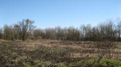 Incolti abbandonati (foto di M.Canziani) nei quali verranno ricreate nuove fasce boscate, ormai molto rare lungo il fiume (www.uomoeterritoriopronatura.it)