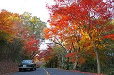 Giulia and autumn leaves 2
