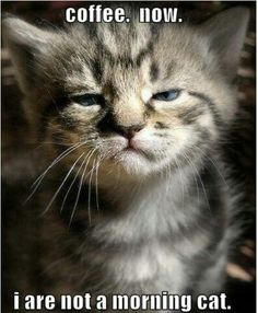 I dont hate mornings but the cat's face looks funny :D Funny Shit, Funny Cute, Hilarious, Funny Animal Pictures, Funny Animals, Cute Animals, Animal Pics, Random Pictures, Animal Captions