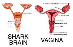 "A sharks brain looks almost identical to the female reproductive system.  Therefore, my period will now be referred to as ""shark week."""