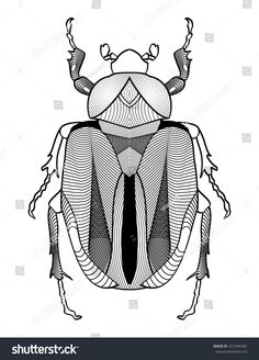 Calligraphic beetle drawing in black and white. Beetle shape decorated with graphic elements. Vector EPS10