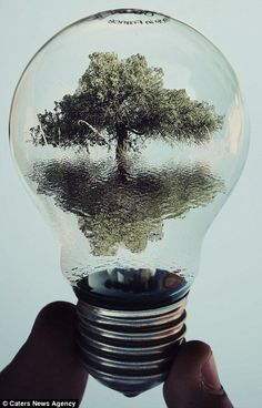 Made by: Adrian Limani , Light Bulb art Natural Forms Gcse, Lightbulb Tattoo, Man Vs Nature, Light Bulb Art, Reflection Art, Reflection In Water, Gcse Art Sketchbook, Conceptual Photography, Bulb Photography