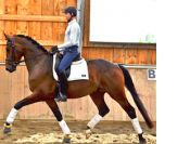 The horse that scored 100%! Unique opportunity to own a world class youngster - the best of the Dutch (Jazz) and the German (Sandro Hit) bloodlines. Modern type, straight forward to ride with an amazing head and hindleg! $100,000