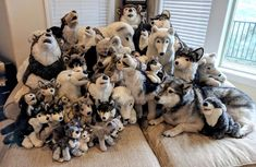 One of these things. by LilMissAleu on DeviantArt Stuffed Toys, Stuffed Animals, Wolf Plush, Wolf Husky, Dinners For Kids, Toys For Girls, Teddy Bears, Plushies, User Profile
