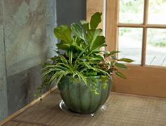 Create a Houseplant Container Garden Missing your garden this winter? Try container gardening indoors by tucking several houseplants into the same pot, just like you would do outdoors. If you adapt the same design principles you use outdoors, you can create houseplant combos that look like they were done by a professional. So get creative, beautify your home – or someone else's if you are giving a gift – and enjoy the benefits of indoor plants all year long. From Bayer Advanced
