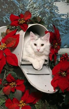 Christmas Cat in mailbox.. | by Shutterstock.com