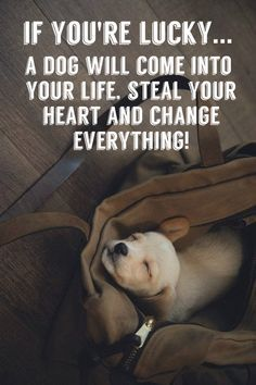 If your lucky a dog will come into your life, steal your heart, and change everything. Quotes about dogs. Loving quotes about dogs.