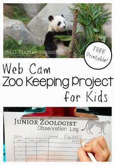 Web Cam Zoo Keeping STEM Project for Kids from Still Playing School