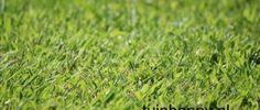 Groen gazon minder werk dan je denkt! #gazon #gras #tuinieren tuintip
