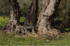Σχετική εικόνα Mount Rushmore, Greece, Mountains, Nature, Plants, Travel, Greece Country, Naturaleza, Viajes
