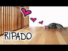 RIPADO - PRIVACIDADE COM LUMINOSIDADE - YouTube