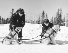 Two members of the Royal Canadian Mounted Police (R.C.M.P.) hitching sled dogs into their harness before going on patrol, 1957.
