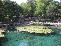 Cenotes at Dzibilchaltun Mayan Ruins, Progreso, Yucatán.