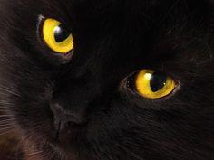 Ganz schön gruselig: Schwarze Halloween-Katzen