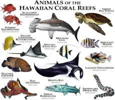 Animals of the Hawaiian Coral Reefs by rogerdhall