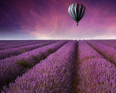 Landscape Photography Lavender Field by AroundTheGlobeImages