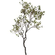 Crate & Barrel Manzanita Branch with Leaves ($70) ❤ liked on Polyvore featuring home, home decor, floral decor, flowers, plants, fillers, backgrounds, trees, effects and text