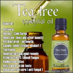 Uses And Benefits Of Tea Tree (Full Guide) ►► http://www.herbs-info.com/essential-oils/tea-tree-essential-oil.html?i=p
