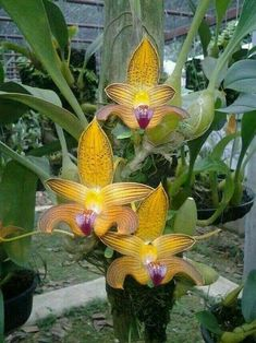 Amazing orchid pix #orchidsterrarium