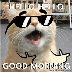 Good Morning Wishes Gif, Good Morning Text Messages, Funny Good Morning Memes, Good Morning Funny Pictures, Good Morning Beautiful Quotes, Good Morning Texts, Morning Greetings Quotes, Good Morning Good Night, Morning Sayings