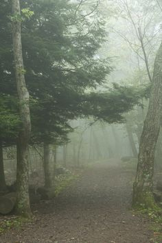 Hawksbill Mountain Trail | By Mike Potter | Shenandoah National Park