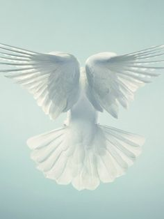 He will cover you with his feathers, and under his wings you will find refuge; his faithfulness will be your shield and rampart. Psalm 91