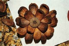 hickory nut crafts - Bing Images