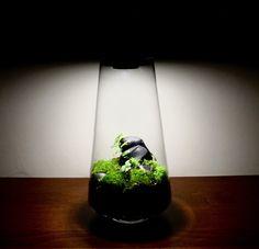 Lamp Terrarium