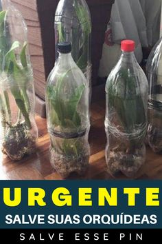 Home Design Decor, Water Bottle, 98, Garden, Drinks, Pasta, Bottle Garden, Plantain Ideas, Succulent Landscaping
