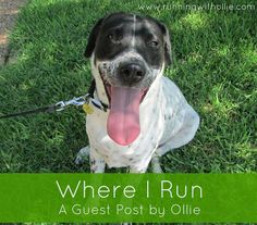 RUNNING WITH OLLIE: Where I Run: A Guest Post by Ollie - click through to read