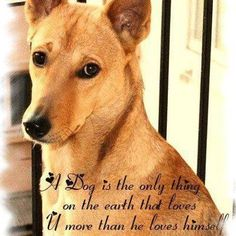 Quotes about dogs - http://todays-quotes.com/2013/02/19/quotes-about-dogs/