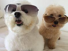 Ray Bans, Sunglasses, Style, Fashion, Swag, Moda, Fashion Styles, Sunnies, Shades