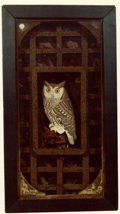 Untitled (Grand Owl Habitat) - Joseph Cornell