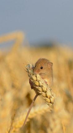 Rat des villes et rats des champs                                                                                                                                                                                 More