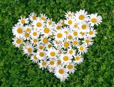 Daisy Wallpaper, Wallpaper Pictures, Heart Wallpaper, Wallpaper Ideas, Iphone Wallpaper, Heart In Nature, Heart Art, Nature Gif, I Love Heart