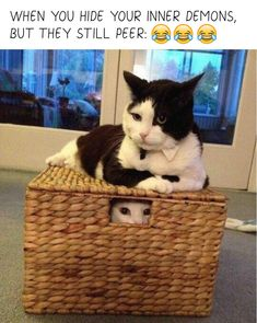 #funny #funnyanimals #cats