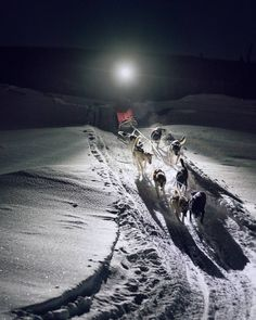 Last week's #mckaylive trip wasn't just about photographing the aurora - There was 1am dog sledding and the chance to photograph Deke and his dogs in action.  It was dark the dogs were moving fast and the only real light was Deke's headlamp.  It was challenging but he made more than a few laps giving everyone time to practice.  And later we went dog sledding!! You can see that on my facebook page http://ift.tt/2mFGuwh   Captured with the #sony #a7RII and #85mmGM lens  EXIF: 1/30 second at…