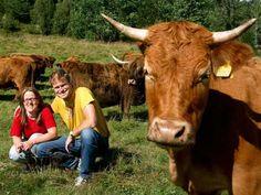 Skålid fjellgårdsmat Cow, Animals, Animais, Animales, Animaux, Animal, Dieren
