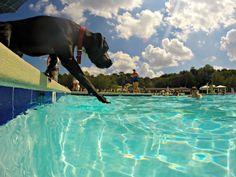 9. Go for a Swim at Killens Pond State Park