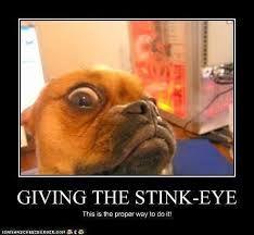Stinkeye Videos Funny Viral Dog Fails Dogs