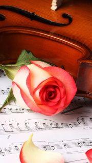 classical musical rose