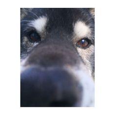 ・ ・ 近すぎて😂 可愛すぎるな〜うちのあいちゃん💕 今日もおやつ欲しくて必死だったな🐕 ・ おかんと食べたマックのポテトが美味しすぎたな🍟🍟 ・ お腹すごい空く。。。 ・ #dog #dogstagram #dogs #dog🐶 #pet #petsagram #love #family #ig #ig_japan #l4l #f #saitama #愛犬 #散歩 #犬 #しばいぬ #いぬら部 #柴犬 #黒柴 #ファインダー越しの私の世界
